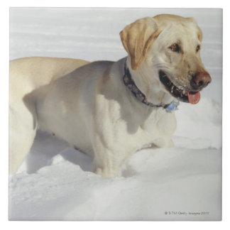 Dog standing in snow large square tile