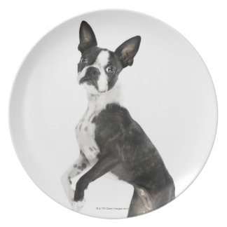 dog standing on 2 legs looking at camera melamine plate