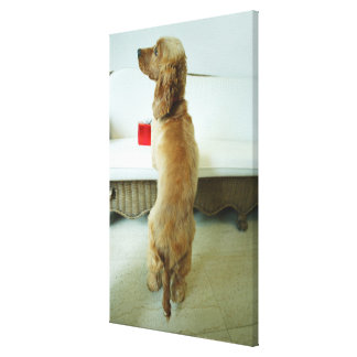 Dog standing on a couch with a gift canvas print