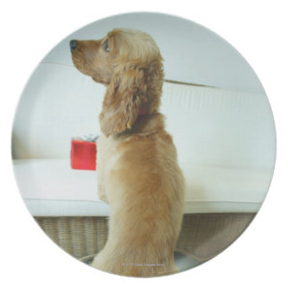 Dog standing on a couch with a gift dinner plate