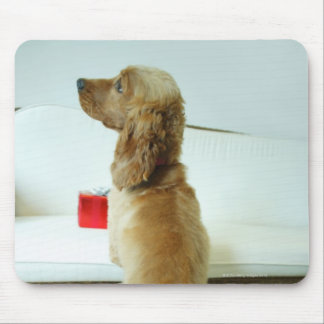 Dog standing on a couch with a gift mouse pad