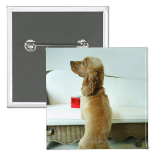 Dog standing on a couch with a gift pinback button