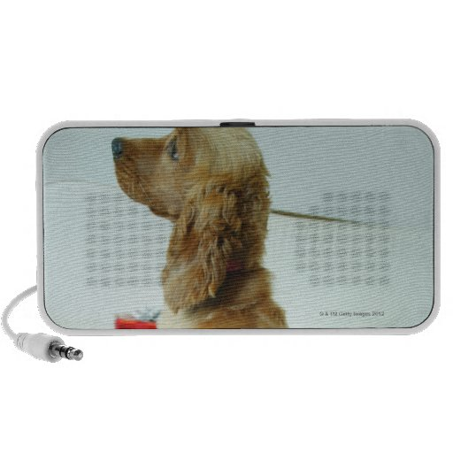 Dog standing on a couch with a gift notebook speaker