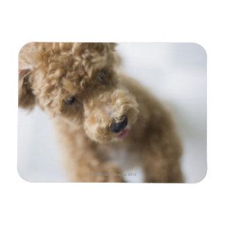 Dog standing on floor rectangular photo magnet