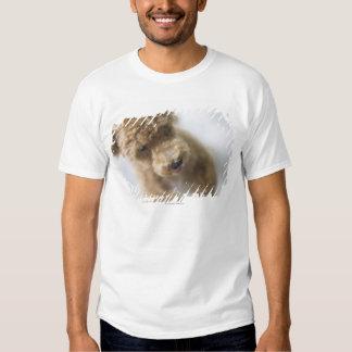 Dog standing on floor shirt