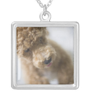 Dog standing on floor silver plated necklace