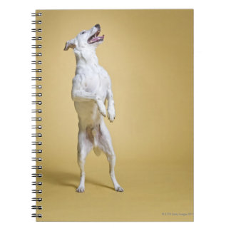 Dog standing on hind legs notebook