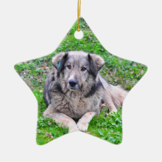 Dog star ornament