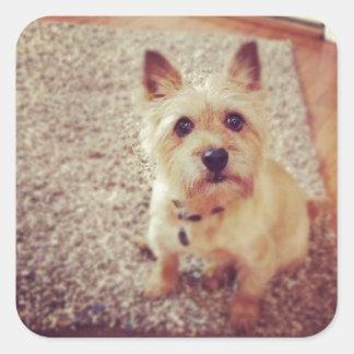 Dog Square Sticker
