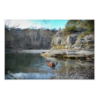 Dog Swim Campbell's Hole Barton Creek Austin Texas Photographic Print
