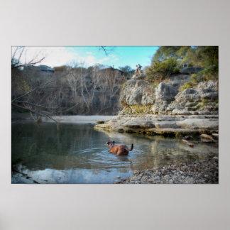 Dog Swim Campbell's Hole Barton Creek Austin Texas Poster