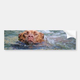 Dog Swimming Bumper Sticker