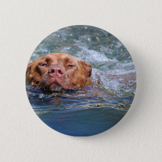 Dog Swimming Button