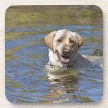 Dog swimming coasters