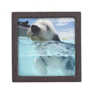 Dog Swimming in a Swimming Pool Keepsake Box