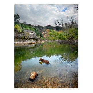 Dog swimming in Barton Creek - Austin Texas Postcard