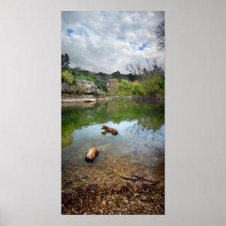 Dog swimming in Barton Creek - Austin Texas Poster