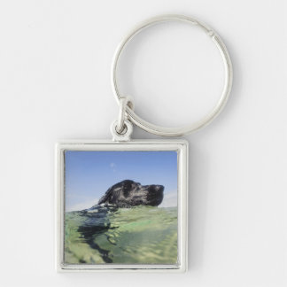Dog swimming in water keychain