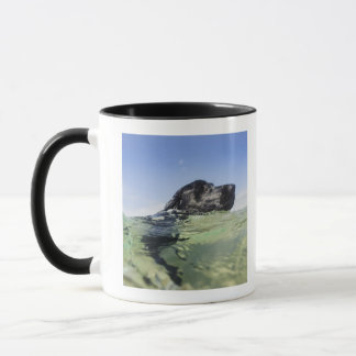 Dog swimming in water mug