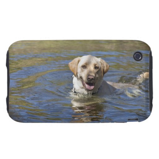 Dog swimming iPhone 3 tough cover