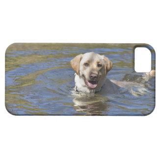 Dog swimming iPhone SE/5/5s case