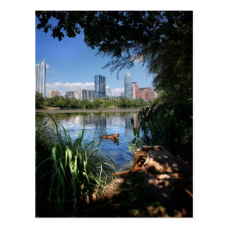 Dog Swimming Ladybird Lake 2 Downtown Austin Texas Postcard