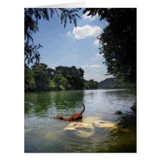 Dog Swimming Ladybird Lake - Downtown Austin Texas Card