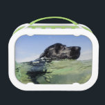 "Dog Swimming Lunch Box<br><div class=""desc"">Dog Swimming</div>"