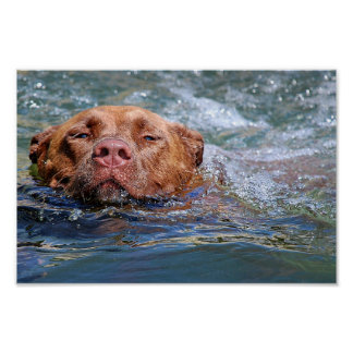 Dog Swimming Poster