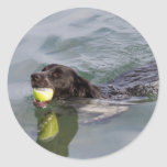 Dog swims with ball in mouth round sticker