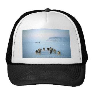 Dog teams, Devon Island, Northwest Territories Trucker Hat