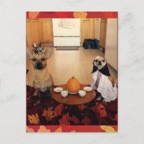 Dog Thanksgiving Holiday Postcard