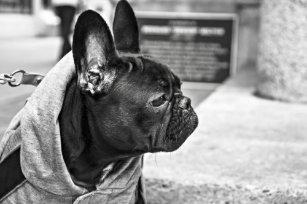 Dog Themed Black France Bulldog With Scarf Siting Bathroom Set
