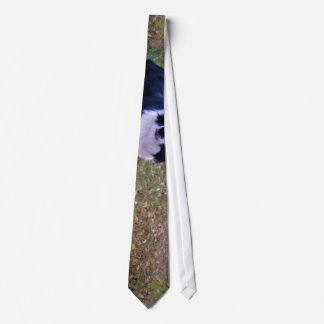 Dog Themed, Border Collie Lies In Yard With Fallen Neck Tie