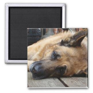 Dog Tired Magnet