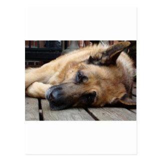 Dog Tired Postcard