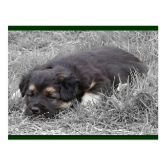 Dog Tired Postcards