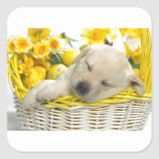 Dog Tired Square Sticker