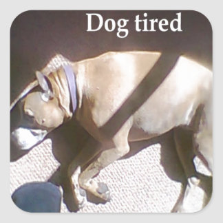 Dog Tired Square Stickers