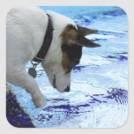 Dog touching water at the swimming pool square sticker