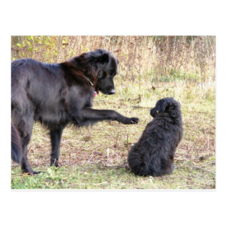 Dog Training-Customizable Postcard