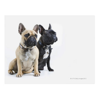 Dog training & obedience postcard