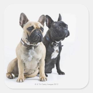 Dog training & obedience square sticker