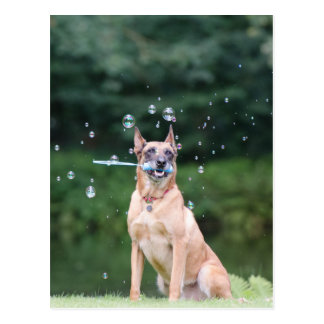 Dog trick: Soap bubbles provide Postcard