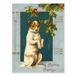 Dog under a holly branch -vintage christmas card postcard