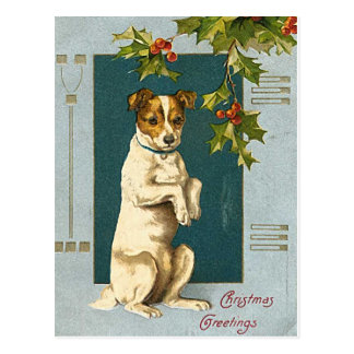 Dog under a holly branch -vintage christmas card postcard