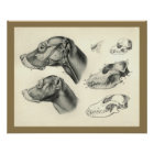 Dog Veterinary Skull Head Muscle Anatomy Print