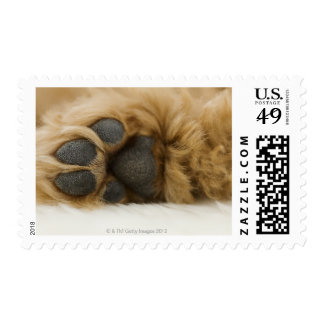 Dog, view of leg stamps