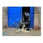 Dog Waiting in Front Of Blue Door, Cusco, Peru Post Card
