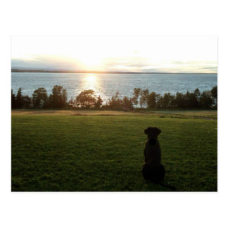 Dog watches sunset over Lake Champlain Postcard
